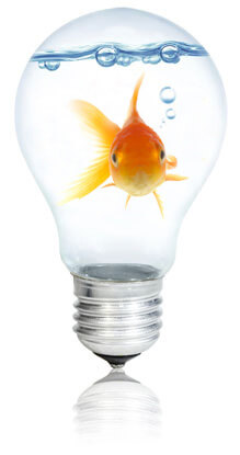 Fish swimming in a light bulb, Fishbowl Inventory Blog
