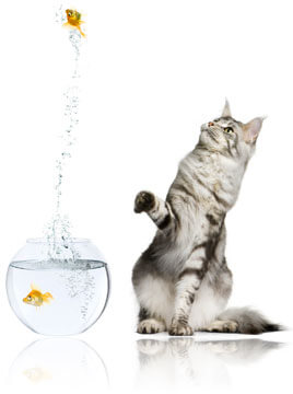 Fish jumping above cat, Fishbowl Inventory Blog