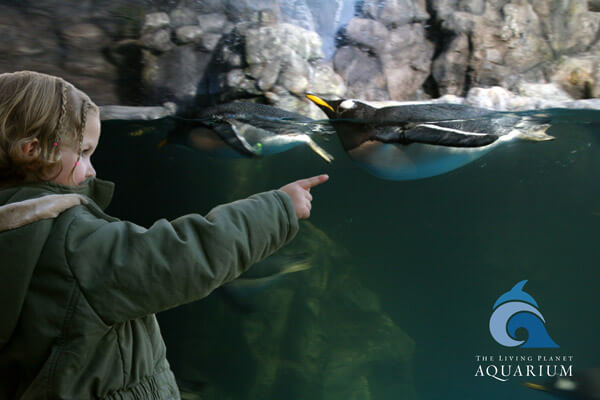 Girl pointing at penguins at The Living Planet Aquarium, Fishbowl Inventory Blog