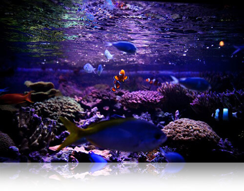 The Living Planet Aquarium followed a similar path as Fishbowl, Fishbowl Inventory Blog